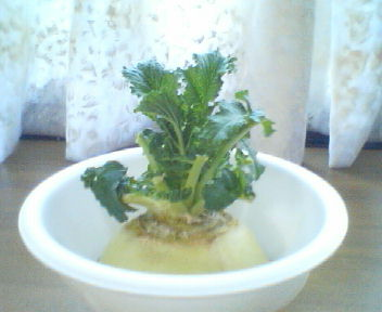 リサイクル野菜
